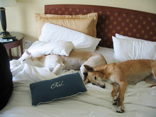 San Francisco pet friendly hotels