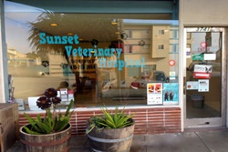 vet in san francisco pet friendly veterinary hospital in san francisco ca